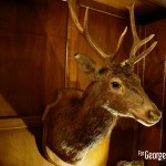 Tete Cerf Aberlour Aberlour Hunting Club