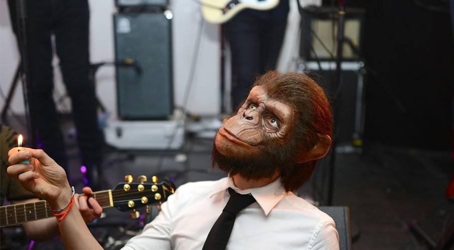 Monkey Crashers TV