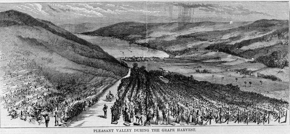 Gravure vignes pérou espanols amérique du sud vins