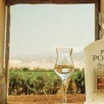 À la découverte du Pisco Portón