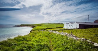 Scapa whisky Orcades