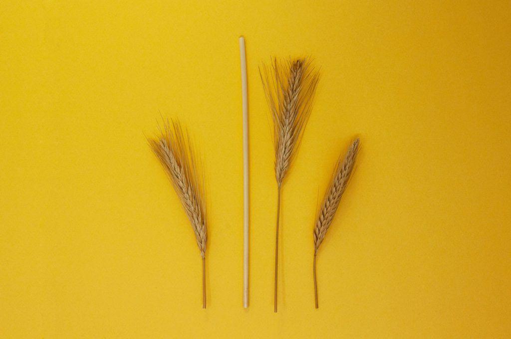 Pailles blé