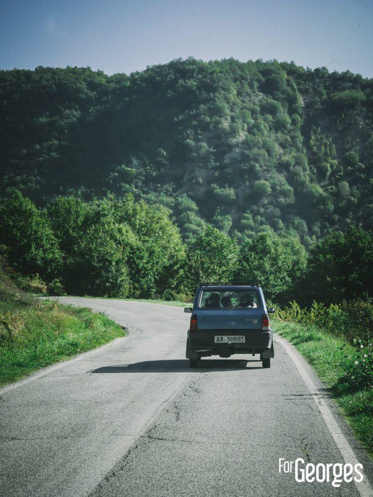 Cueillette baie de genièvre en Toscane