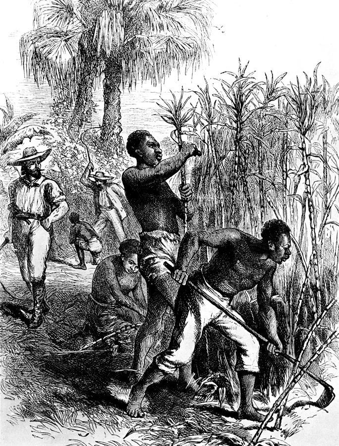 Esclave dans une plantation